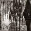CypressSwamp 0012
